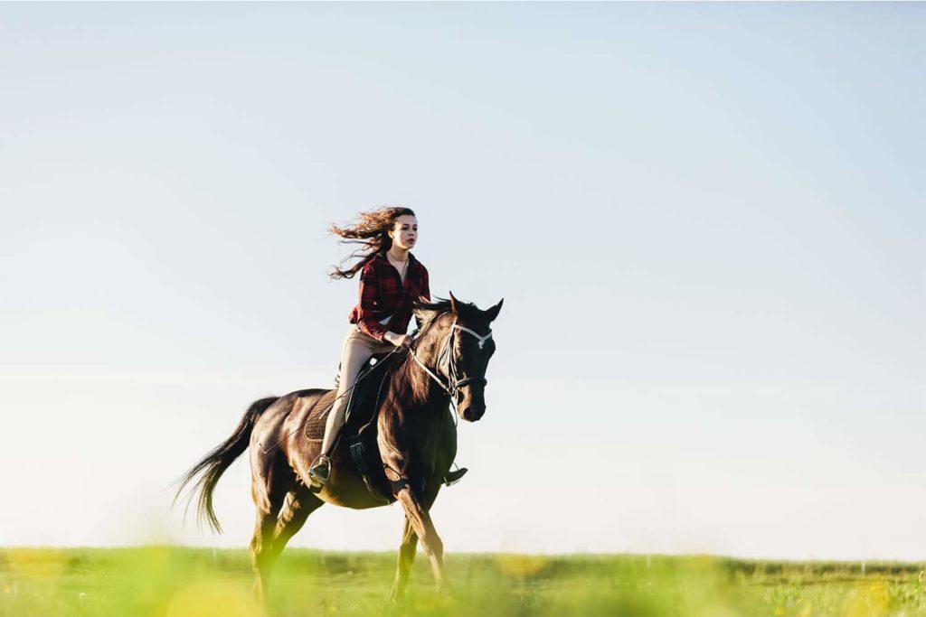 osteopathie schnabel pferd osteopathie 1024x683 - Osteopathie für Tiere