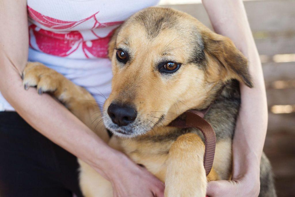 osteopathie schnabel tierosteopathie hunde 1024x683 - Osteopathie für Tiere